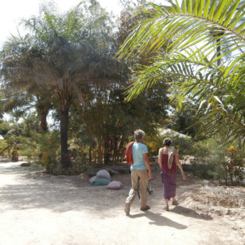 Man and woman walking into the garden with palm trees